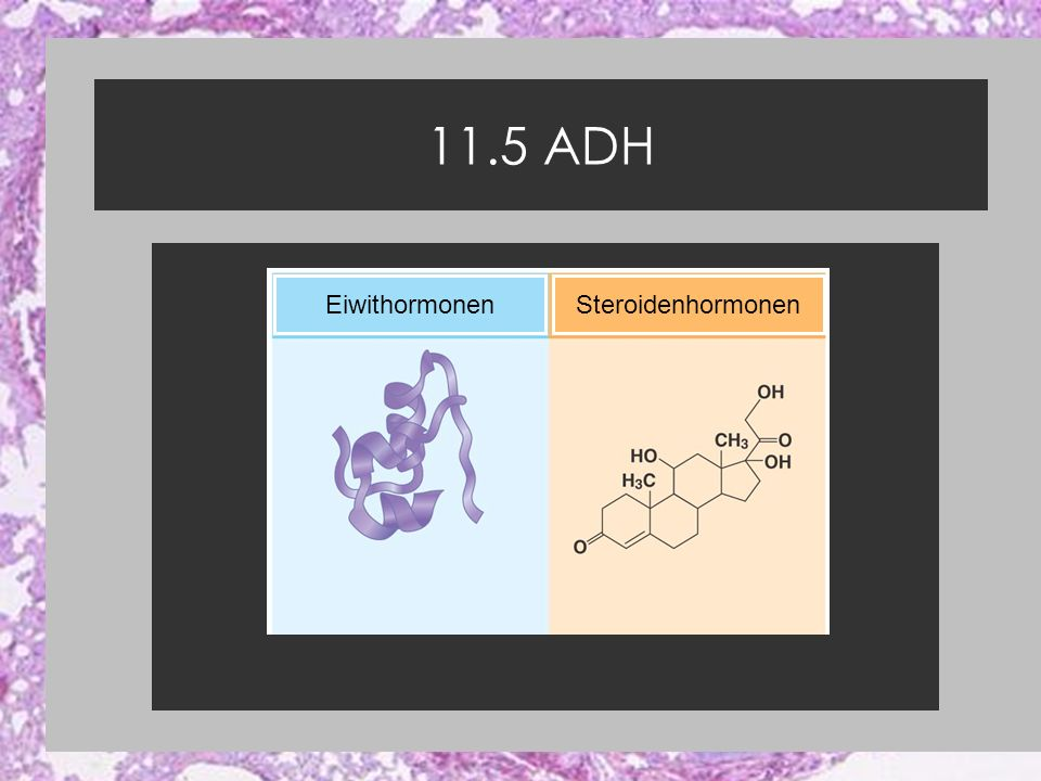 EiwithormonenSteroidenhormonen