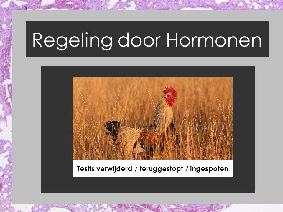 Regeling door Hormonen Testis verwijderd / teruggestopt / ingespoten