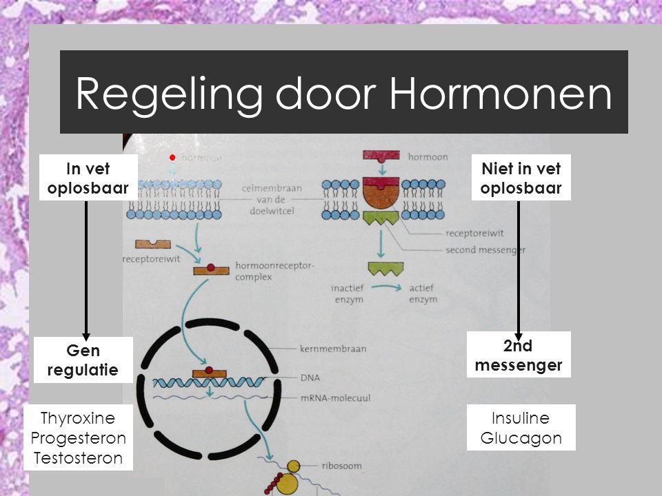 Regeling door Hormonen In vet oplosbaar Niet in vet oplosbaar Gen regulatie 2nd messenger Thyroxine Progesteron Testosteron Insuline Glucagon