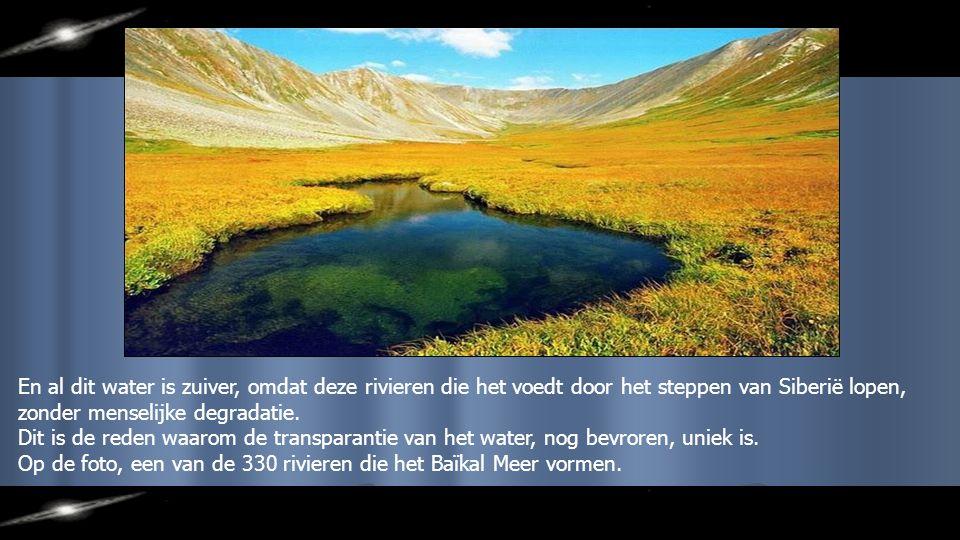 En al dit water is zuiver, omdat deze rivieren die het voedt door het steppen van Siberië lopen, zonder menselijke degradatie.