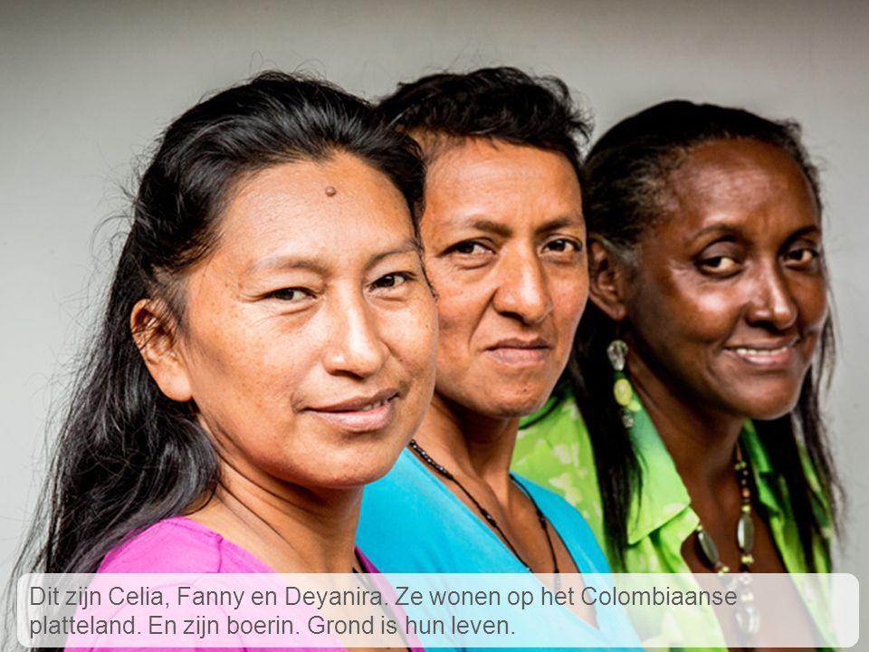 Celia, Fanny en Deyanira wonen op het Colombiaanse platteland. De grond waarop ze wonen wordt bedreigd. Dit zijn Celia, Fanny en Deyanira. Ze wonen op