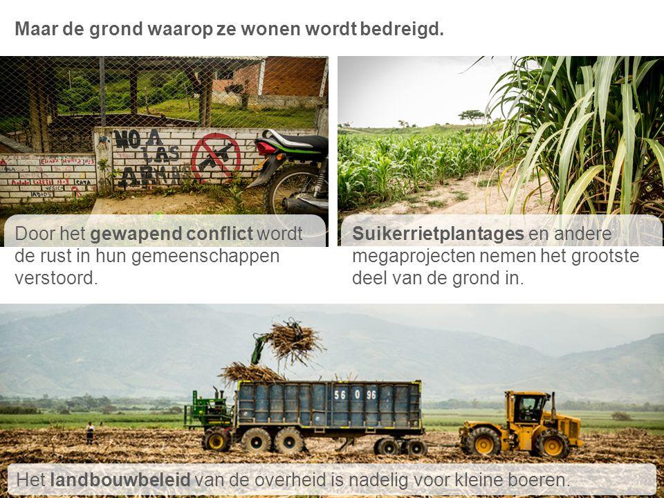 Maar de grond waarop ze wonen wordt bedreigd. 1 3 2 Door het gewapend conflict wordt de rust in hun gemeenschappen verstoord. Suikerrietplantages en a