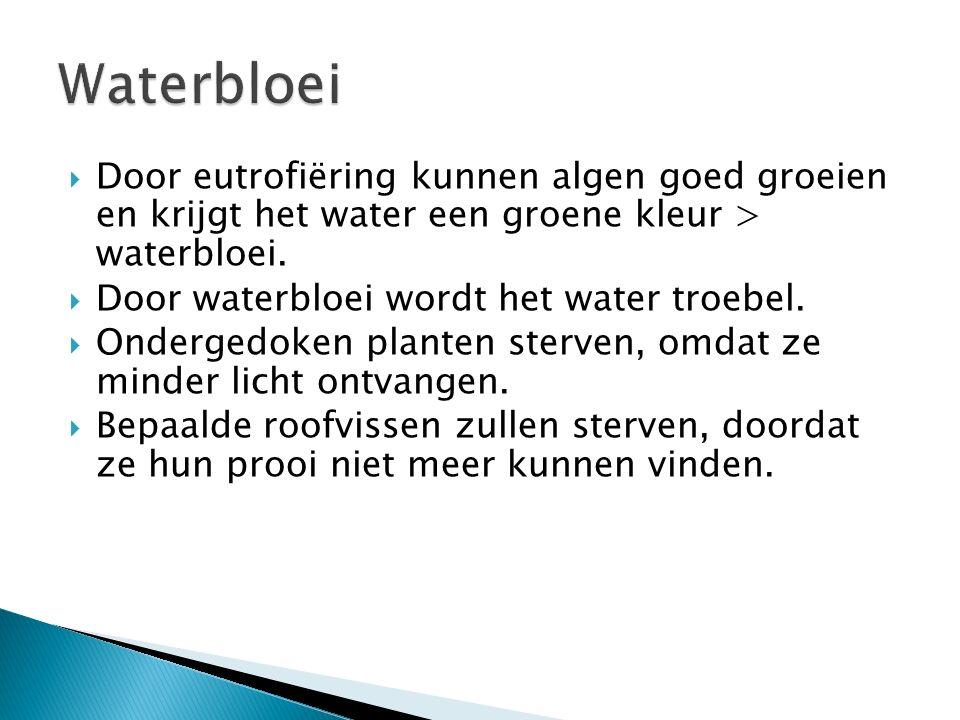  Door eutrofiëring kunnen algen goed groeien en krijgt het water een groene kleur > waterbloei.  Door waterbloei wordt het water troebel.  Onderged