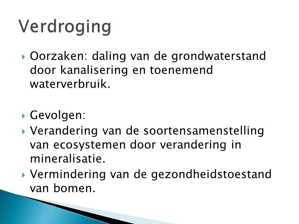  Oorzaken: daling van de grondwaterstand door kanalisering en toenemend waterverbruik.  Gevolgen:  Verandering van de soortensamenstelling van ecos