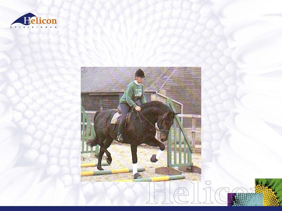 Checklist  Bij correct halsstrekken brengt het paard de hals geleidelijk naar voren en beneden en blijft met een lichte verbinding vloeiend en regelmatig doorlopen.