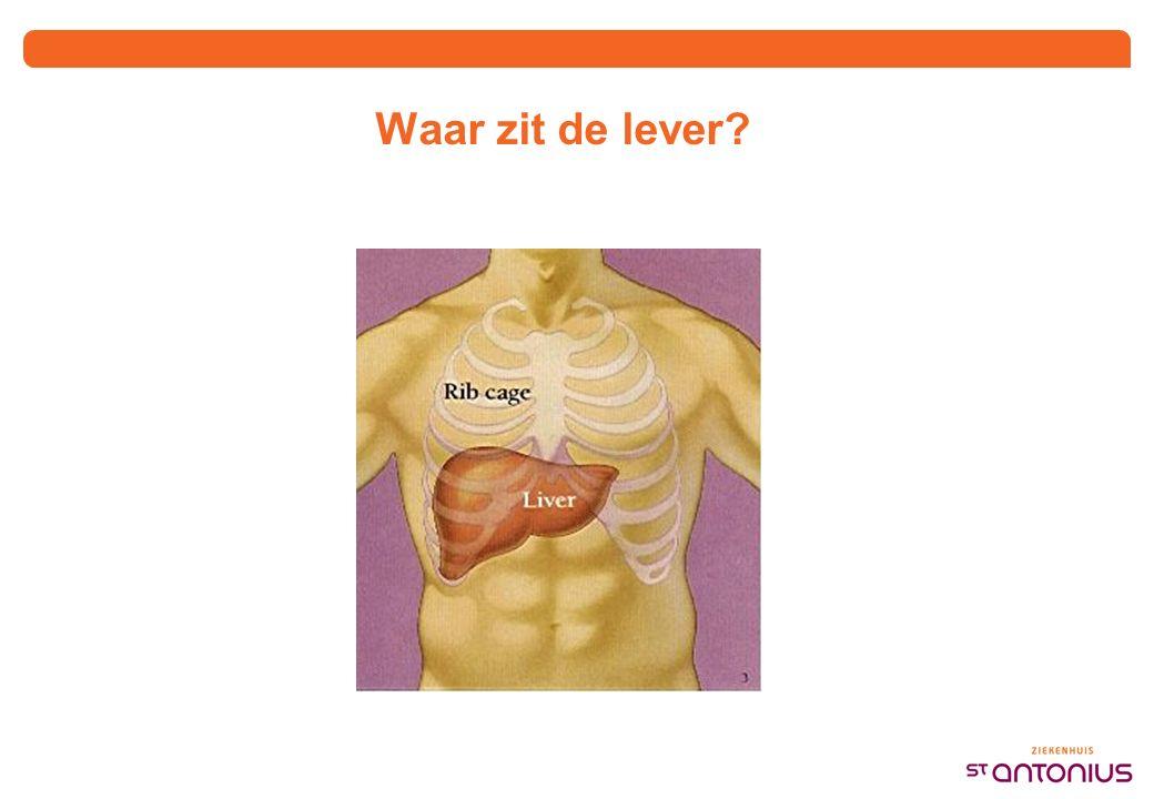 Waar zit de lever?