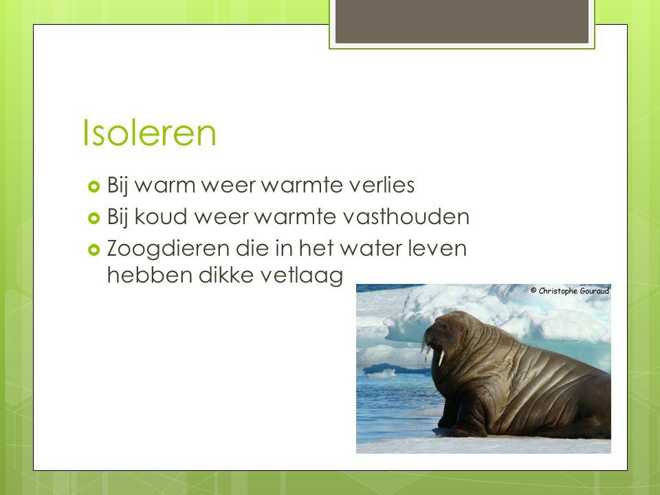 Isoleren  Bij warm weer warmte verlies  Bij koud weer warmte vasthouden  Zoogdieren die in het water leven hebben dikke vetlaag