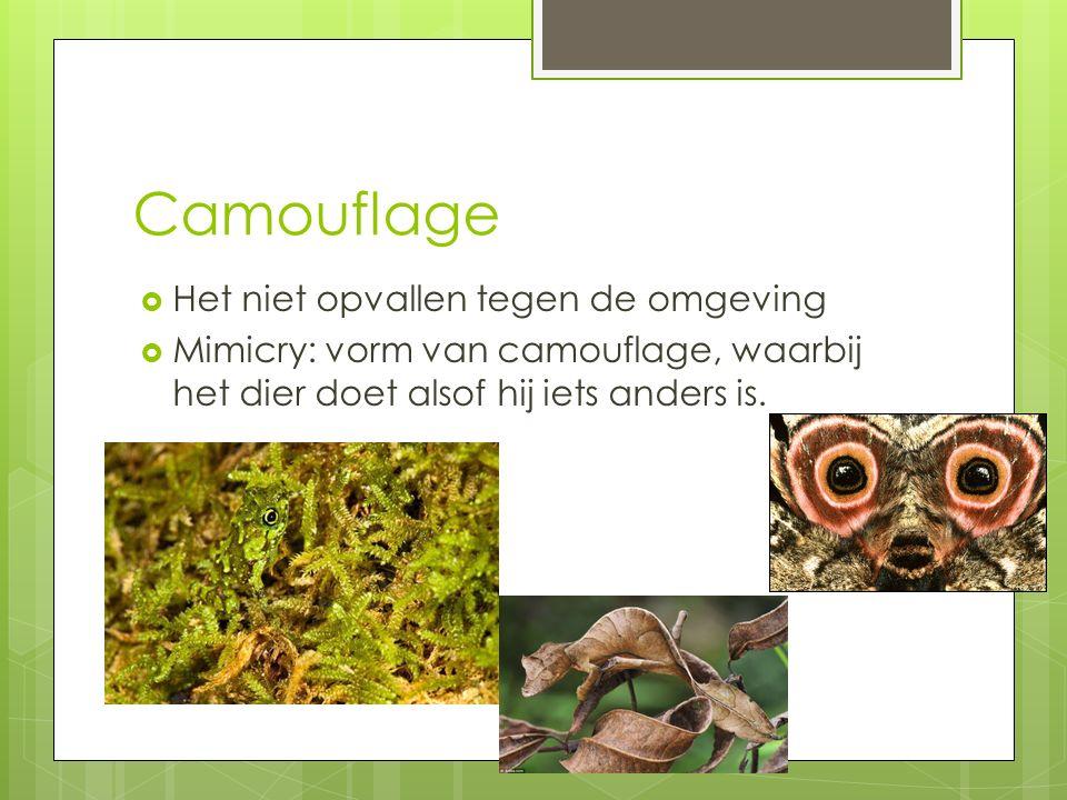 Camouflage  Het niet opvallen tegen de omgeving  Mimicry: vorm van camouflage, waarbij het dier doet alsof hij iets anders is.