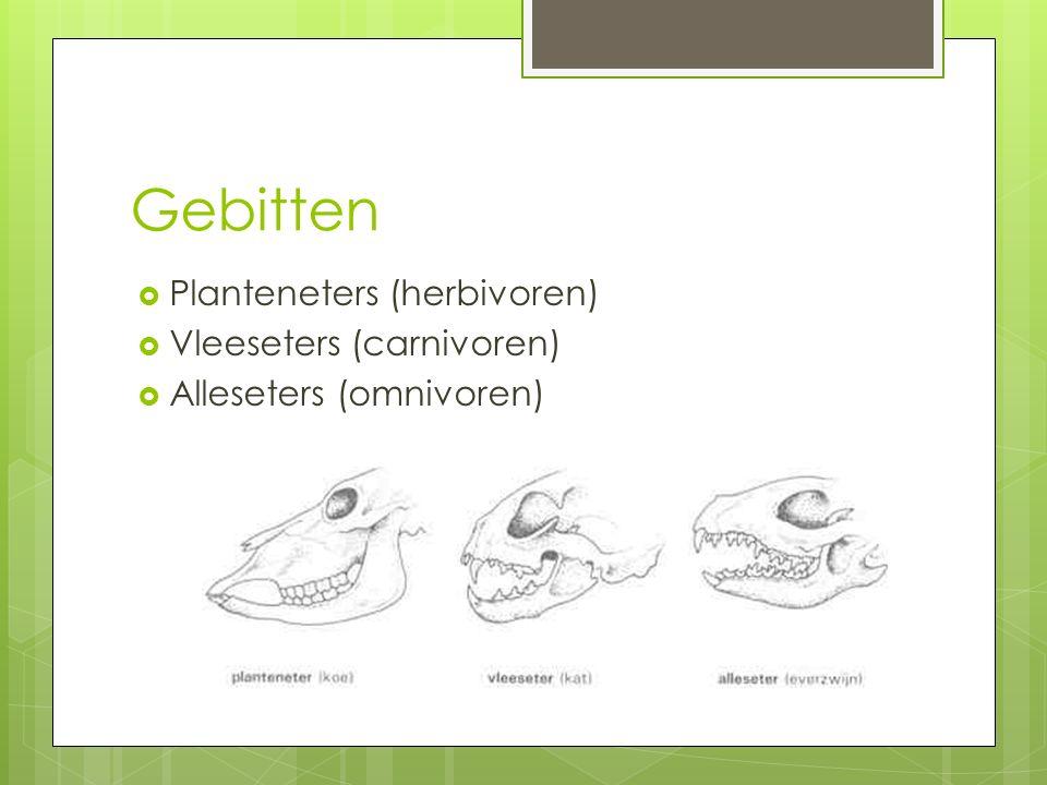 Gebitten  Planteneters (herbivoren)  Vleeseters (carnivoren)  Alleseters (omnivoren)