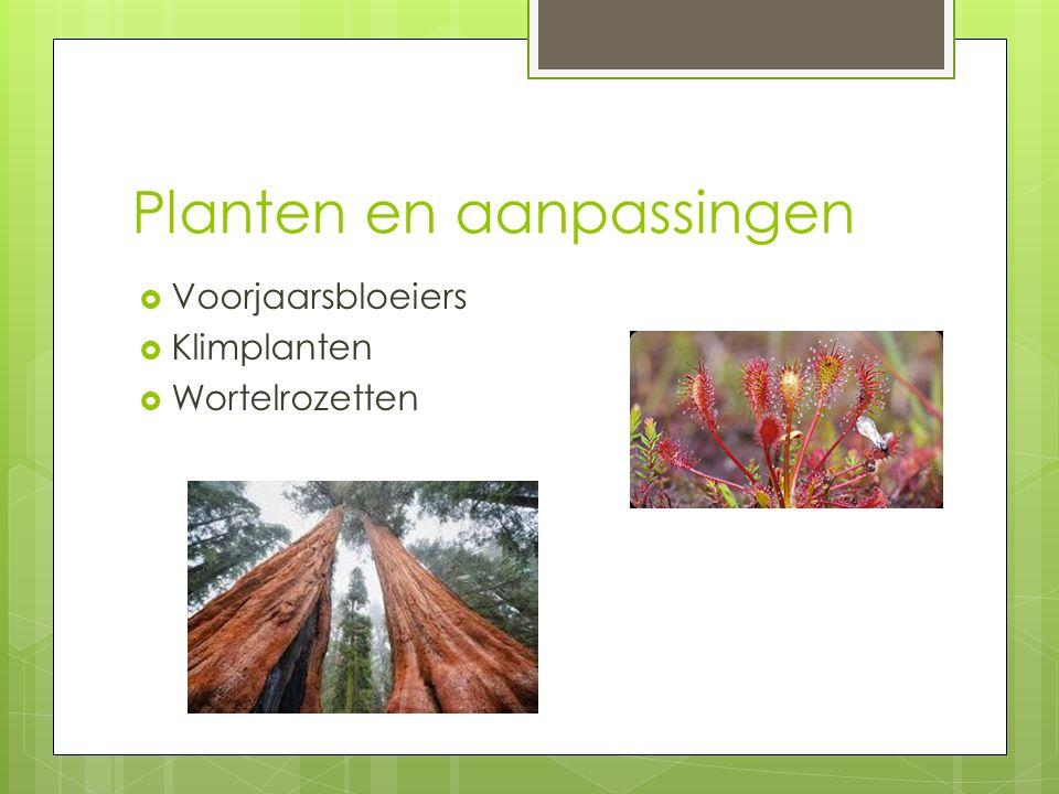 Planten en aanpassingen  Voorjaarsbloeiers  Klimplanten  Wortelrozetten