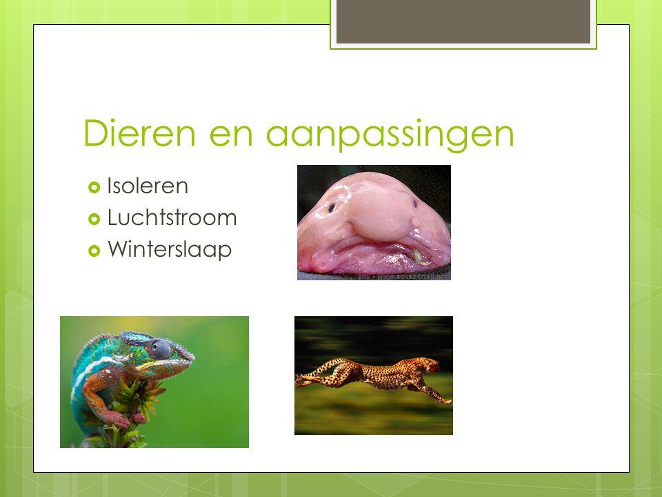 Dieren en aanpassingen  Isoleren  Luchtstroom  Winterslaap