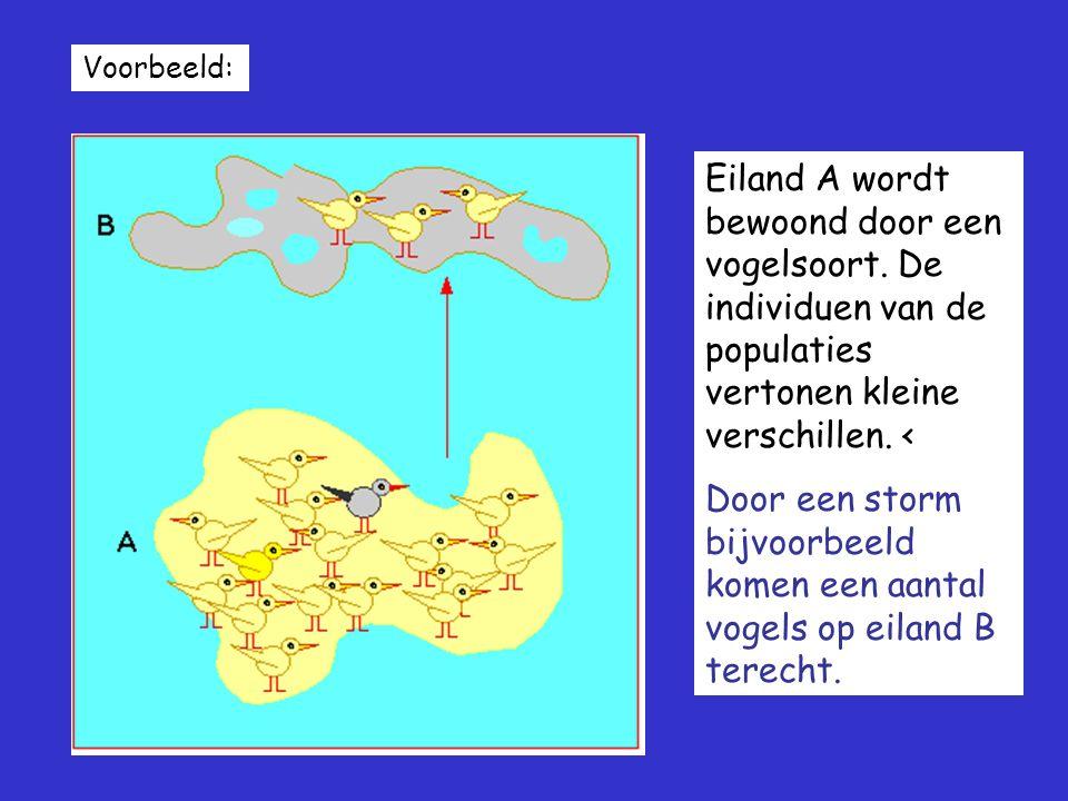 Voorbeeld: Eiland A wordt bewoond door een vogelsoort. De individuen van de populaties vertonen kleine verschillen. < Door een storm bijvoorbeeld kome