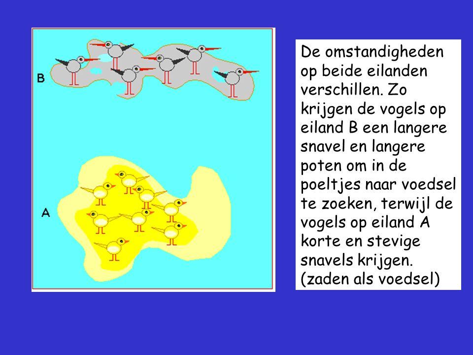 De omstandigheden op beide eilanden verschillen. Zo krijgen de vogels op eiland B een langere snavel en langere poten om in de poeltjes naar voedsel t