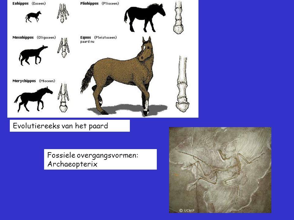 Evolutiereeks van het paard Fossiele overgangsvormen: Archaeopterix