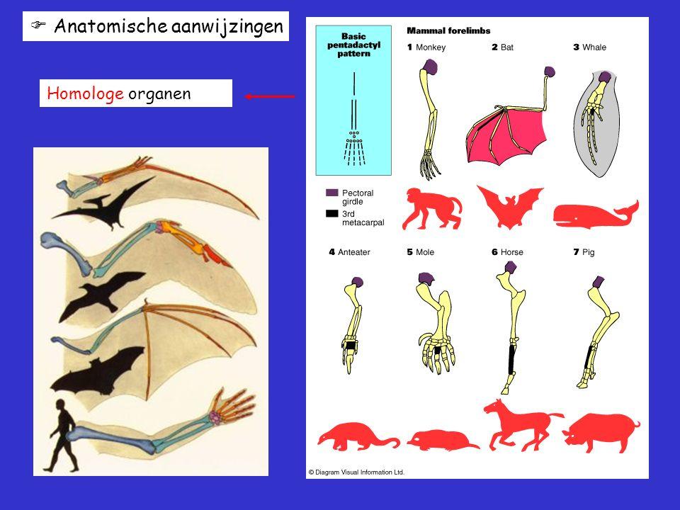  Anatomische aanwijzingen Homologe organen