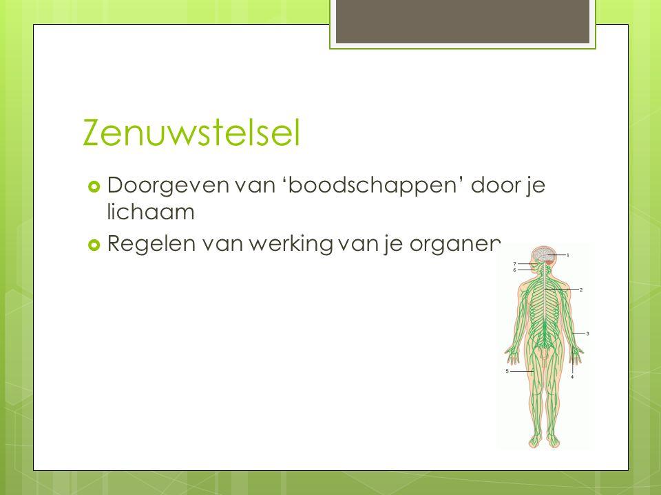 Zenuwstelsel  Doorgeven van 'boodschappen' door je lichaam  Regelen van werking van je organen