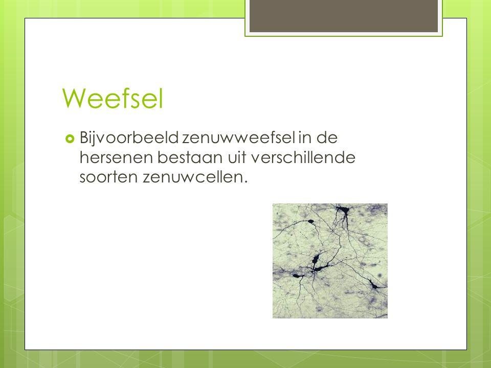Weefsel  Bijvoorbeeld zenuwweefsel in de hersenen bestaan uit verschillende soorten zenuwcellen.