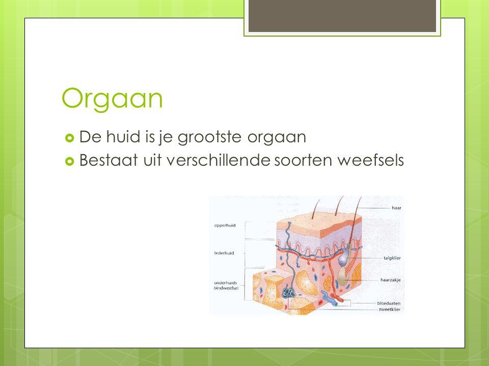 Orgaanstelsels  Verteringsstelsel  Ademhalingsstelsel  Bloedvatenstelsel  Uitscheidingsstelsel  Zenuwstelsel