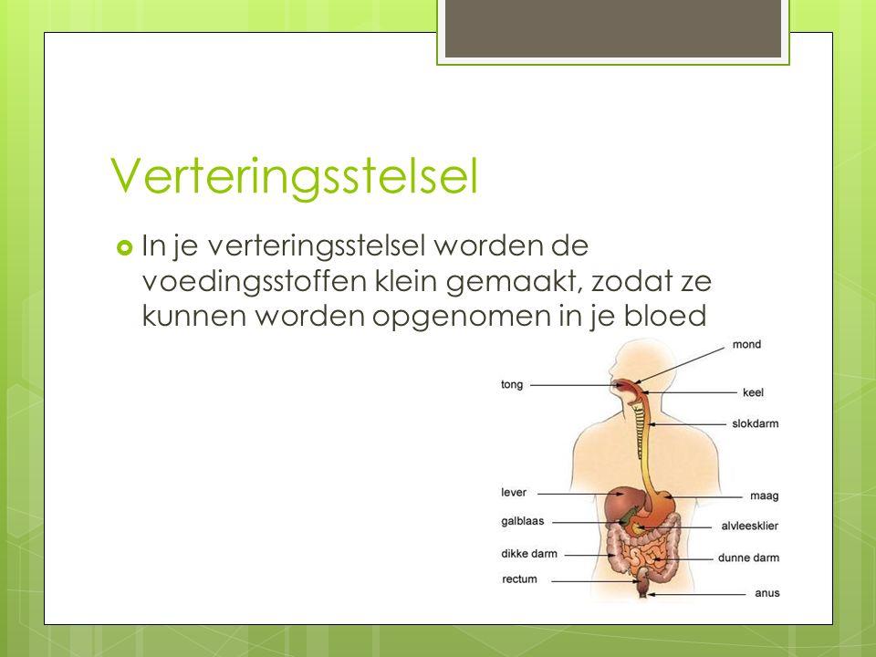 Verteringsstelsel  In je verteringsstelsel worden de voedingsstoffen klein gemaakt, zodat ze kunnen worden opgenomen in je bloed