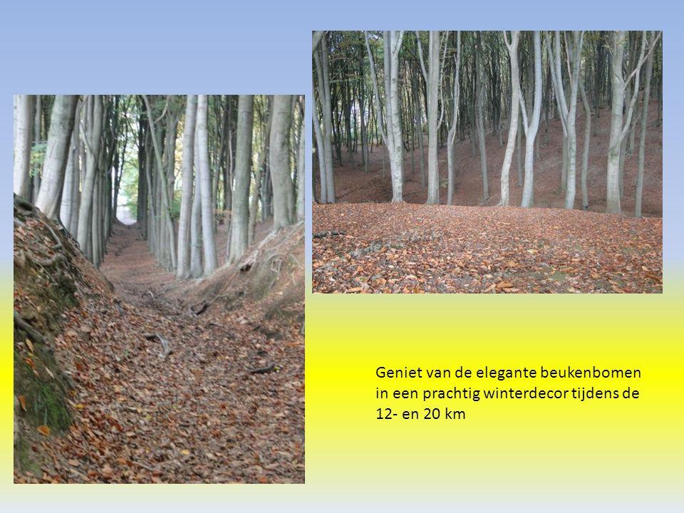 Geniet van de elegante beukenbomen in een prachtig winterdecor tijdens de 12- en 20 km