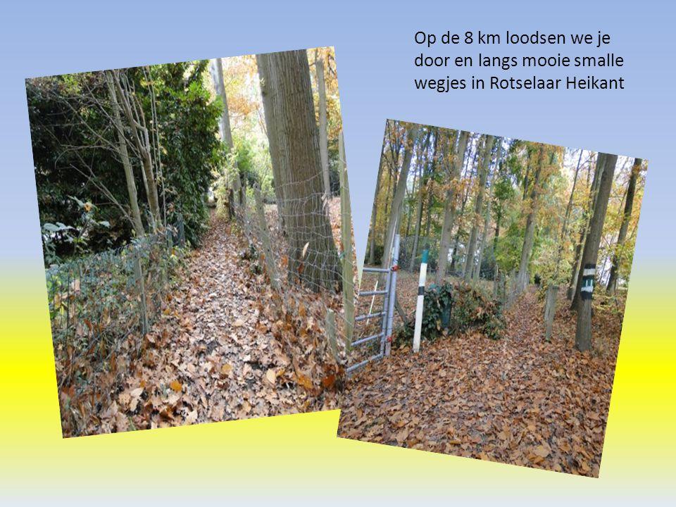 Op de 8 km loodsen we je door en langs mooie smalle wegjes in Rotselaar Heikant