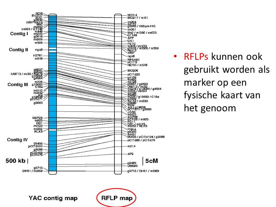 RFLPs kunnen ook gebruikt worden als marker op een fysische kaart van het genoom