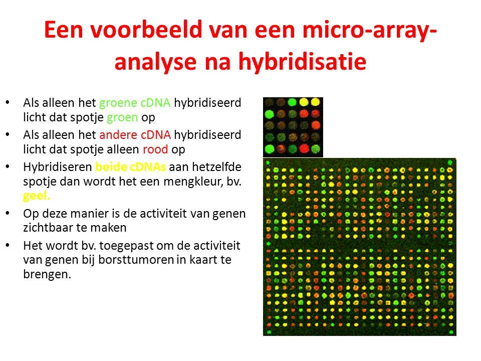 Een voorbeeld van een micro-array- analyse na hybridisatie Als alleen het groene cDNA hybridiseerd licht dat spotje groen op Als alleen het andere cDNA hybridiseerd licht dat spotje alleen rood op Hybridiseren beide cDNAs aan hetzelfde spotje dan wordt het een mengkleur, bv.