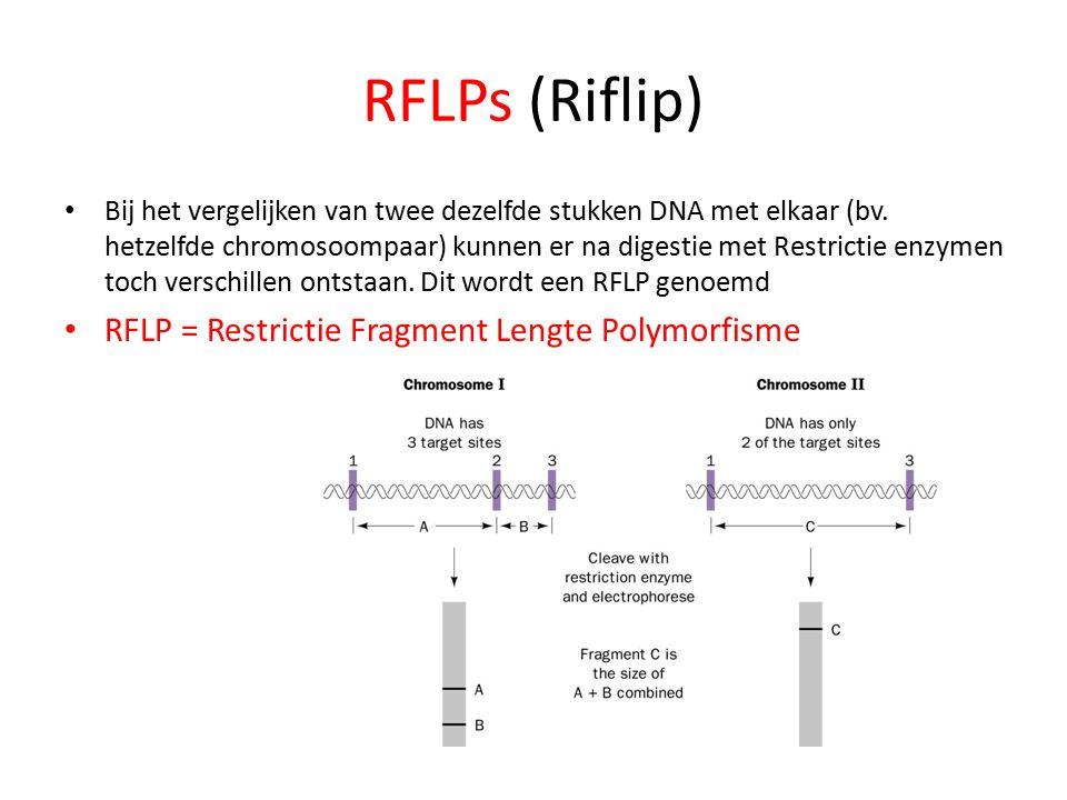 RFLPs (Riflip) Bij het vergelijken van twee dezelfde stukken DNA met elkaar (bv.