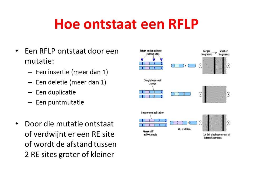 Hoe ontstaat een RFLP Een RFLP ontstaat door een mutatie: – Een insertie (meer dan 1) – Een deletie (meer dan 1) – Een duplicatie – Een puntmutatie Door die mutatie ontstaat of verdwijnt er een RE site of wordt de afstand tussen 2 RE sites groter of kleiner