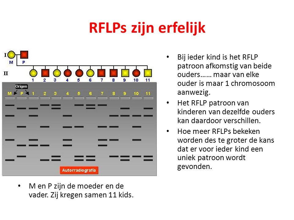 RFLPs zijn erfelijk M en P zijn de moeder en de vader.