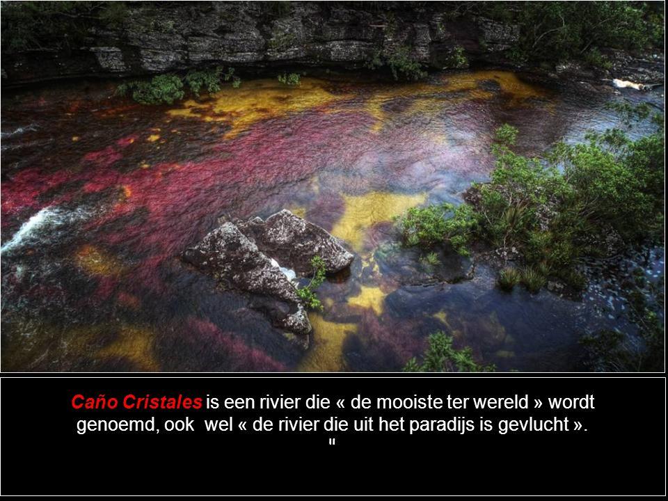 Caño Cristales is een rivier die « de mooiste ter wereld » wordt genoemd, ook wel « de rivier die uit het paradijs is gevlucht ».