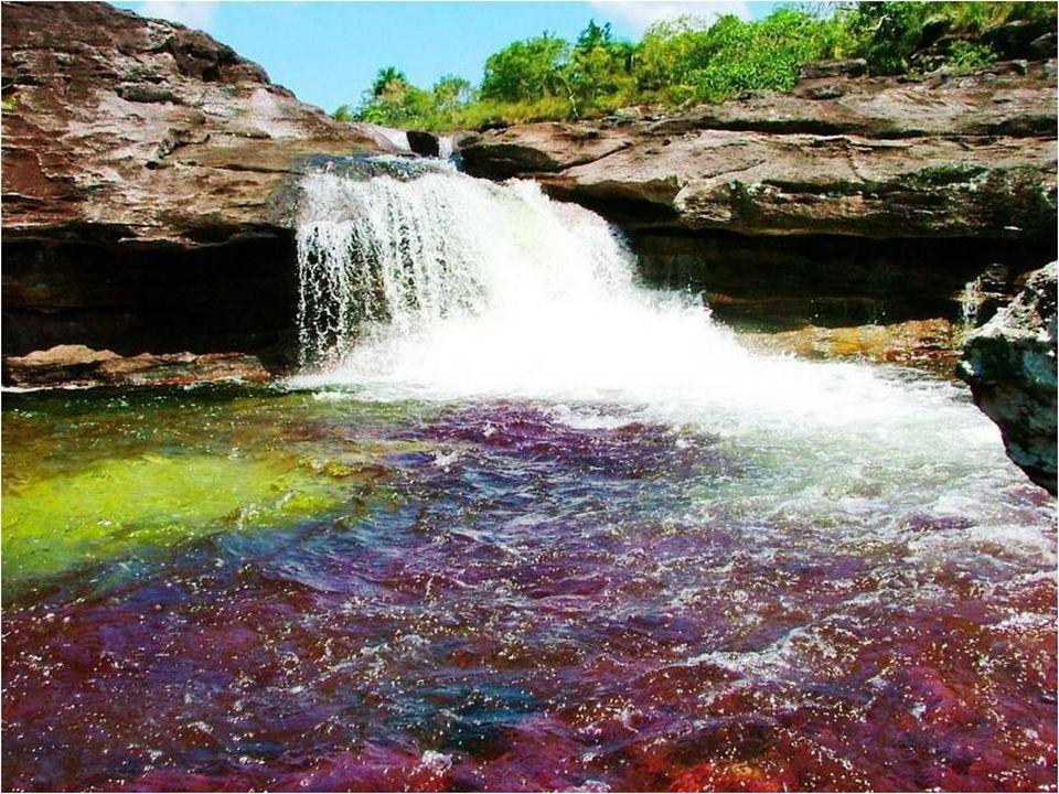 Caño Cristales is een werelderfgoed van de UNESCO.