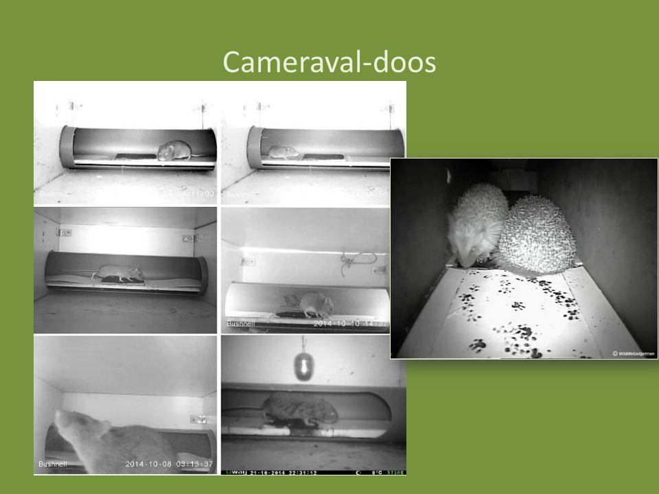 Cameraval-doos