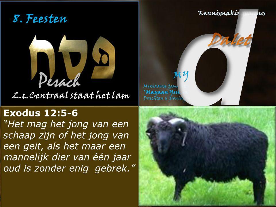 """8. Feesten 2.c.Centraal staat het lam Exodus 12:5-6 """"Het mag het jong van een schaap zijn of het jong van een geit, als het maar een mannelijk dier va"""