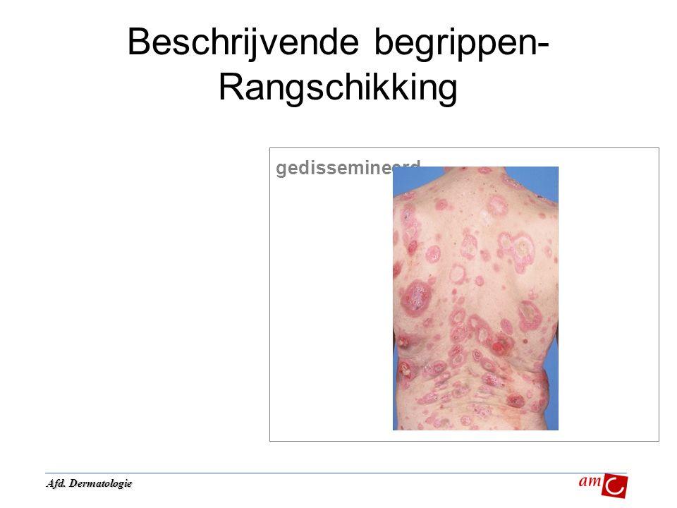 Beschrijvende begrippen- Rangschikking gedissemineerd Afd. Dermatologie