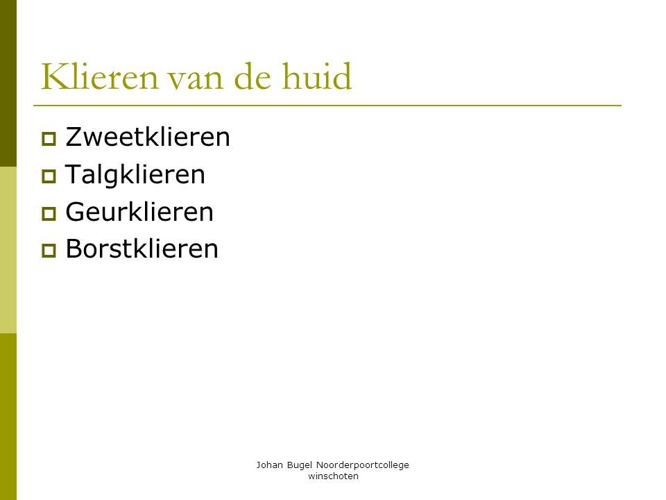 Johan Bugel Noorderpoortcollege winschoten Klieren van de huid  Zweetklieren  Talgklieren  Geurklieren  Borstklieren