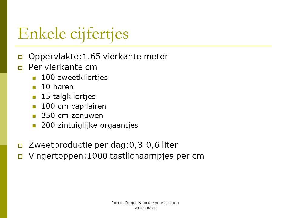 Johan Bugel Noorderpoortcollege winschoten Enkele cijfertjes  Oppervlakte:1.65 vierkante meter  Per vierkante cm 100 zweetkliertjes 10 haren 15 talg