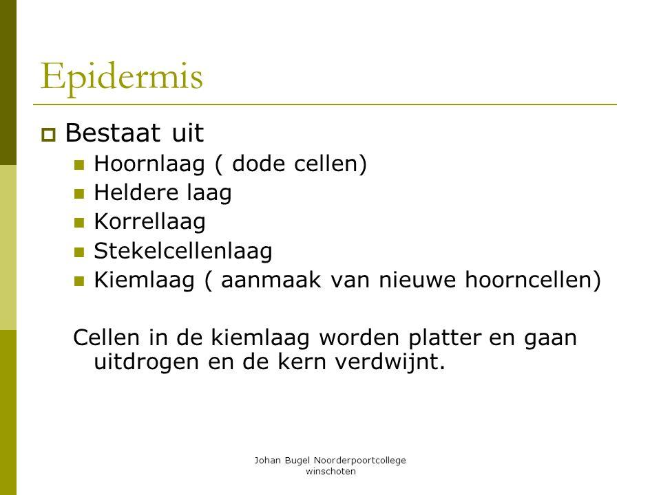 Johan Bugel Noorderpoortcollege winschoten Epidermis BBestaat uit Hoornlaag ( dode cellen) Heldere laag Korrellaag Stekelcellenlaag Kiemlaag ( aanma