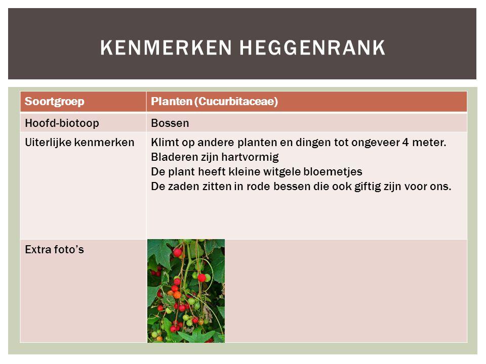 SoortgroepPlanten (Cucurbitaceae) Hoofd-biotoopBossen Uiterlijke kenmerkenKlimt op andere planten en dingen tot ongeveer 4 meter.