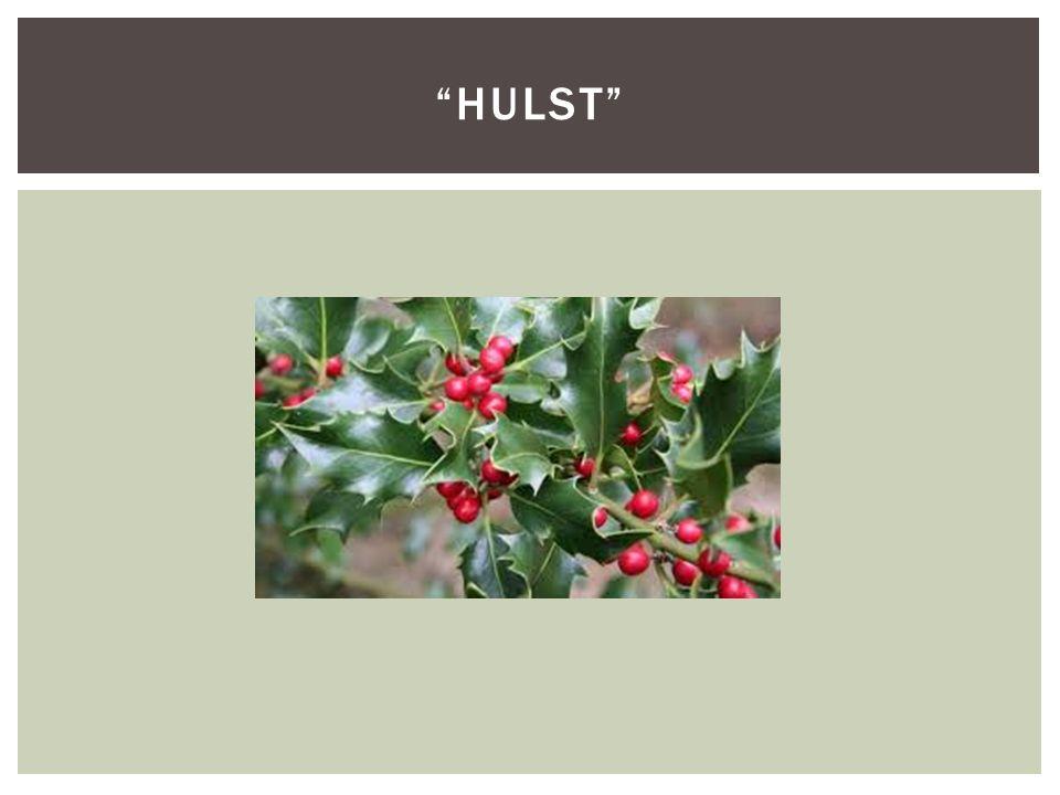"""""""HULST"""""""