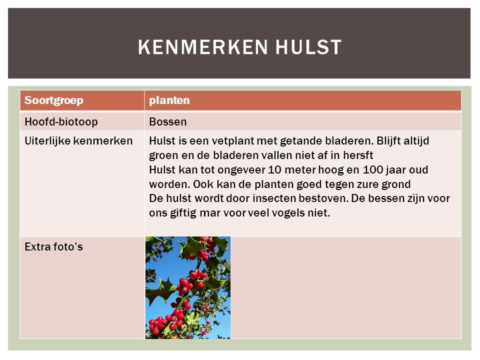 Soortgroepplanten Hoofd-biotoopBossen Uiterlijke kenmerkenHulst is een vetplant met getande bladeren. Blijft altijd groen en de bladeren vallen niet a