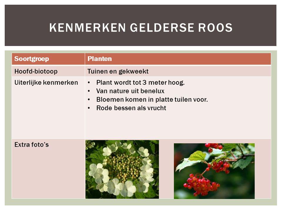 SoortgroepPlanten Hoofd-biotoopTuinen en gekweekt Uiterlijke kenmerken Plant wordt tot 3 meter hoog. Van nature uit benelux Bloemen komen in platte tu