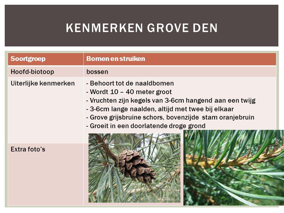 SoortgroepBomen en struiken Hoofd-biotoopbossen Uiterlijke kenmerken- Behoort tot de naaldbomen - Wordt 10 – 40 meter groot - Vruchten zijn kegels van