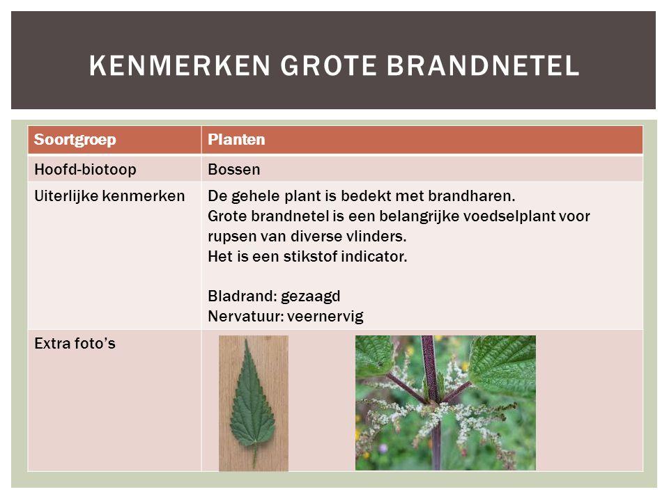 SoortgroepPlanten Hoofd-biotoopBossen Uiterlijke kenmerkenDe gehele plant is bedekt met brandharen. Grote brandnetel is een belangrijke voedselplant v