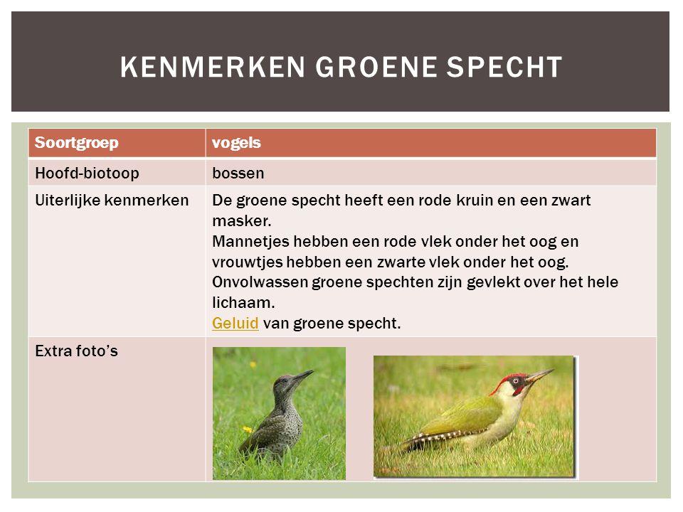 Soortgroepvogels Hoofd-biotoopbossen Uiterlijke kenmerkenDe groene specht heeft een rode kruin en een zwart masker. Mannetjes hebben een rode vlek ond