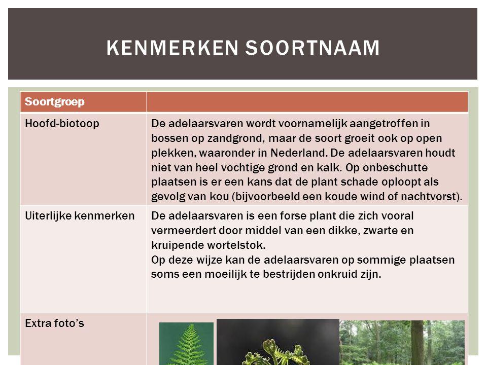 Soortgroep Hoofd-biotoopDe adelaarsvaren wordt voornamelijk aangetroffen in bossen op zandgrond, maar de soort groeit ook op open plekken, waaronder in Nederland.