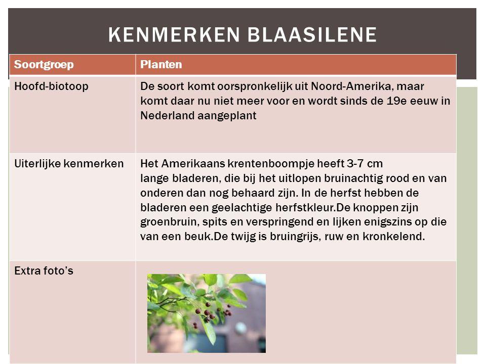 SoortgroepPlanten Hoofd-biotoopDe soort komt oorspronkelijk uit Noord-Amerika, maar komt daar nu niet meer voor en wordt sinds de 19e eeuw in Nederlan