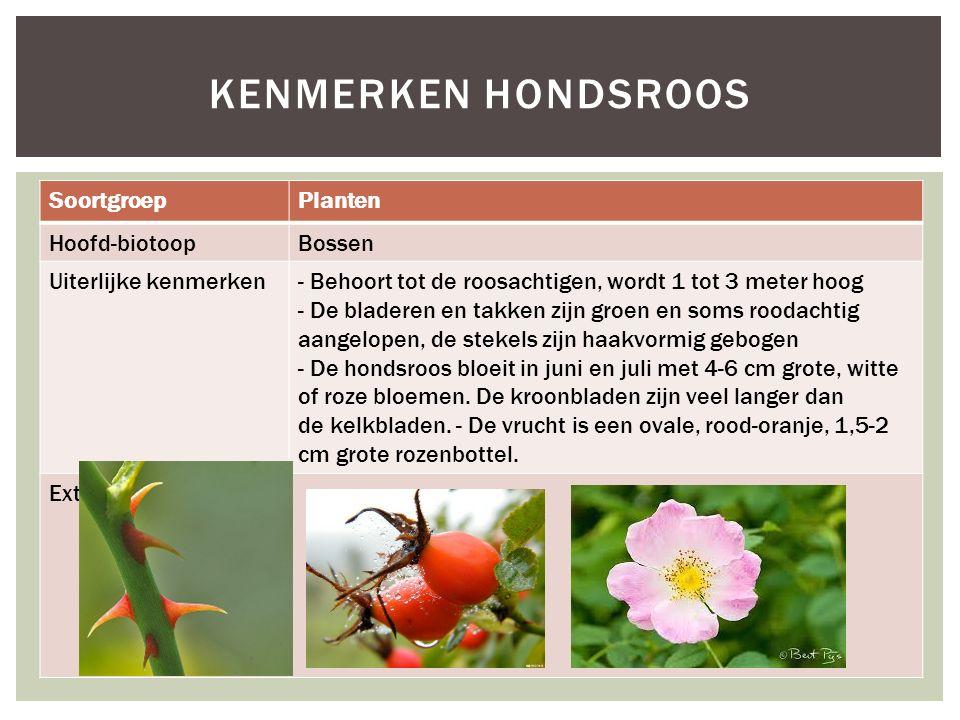 SoortgroepPlanten Hoofd-biotoopBossen Uiterlijke kenmerken- Behoort tot de roosachtigen, wordt 1 tot 3 meter hoog - De bladeren en takken zijn groen e