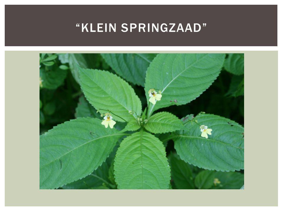 Soortgroepplanten Hoofd-biotoopBossen Uiterlijke kenmerken30-60 cm hoog Groeit in vochtige gebieden Zaden springen wel 3m ver weg Bloem is bleekgeel en ong.