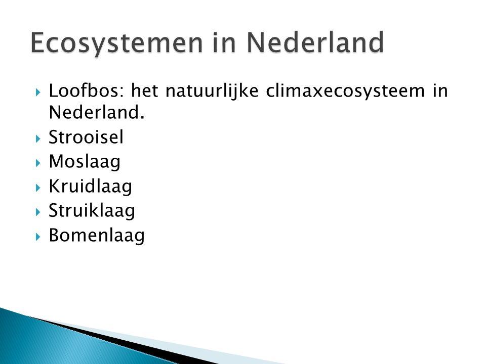  Loofbos: het natuurlijke climaxecosysteem in Nederland.  Strooisel  Moslaag  Kruidlaag  Struiklaag  Bomenlaag
